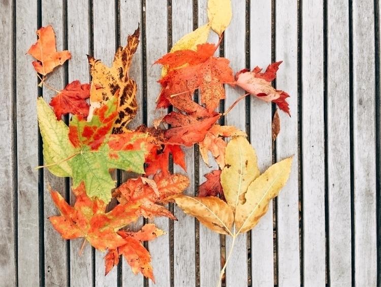 Fall - meganography | ello