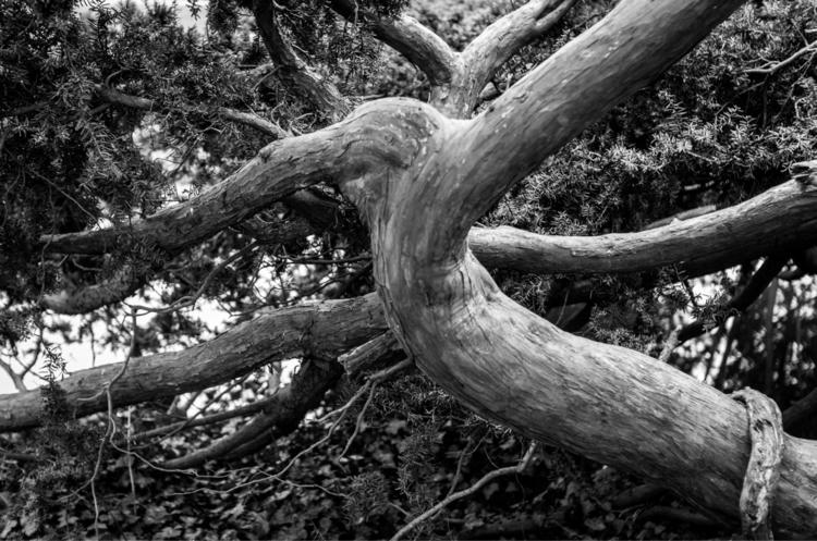 "Untitled, Woods"" woods white ph - petarmilic | ello"