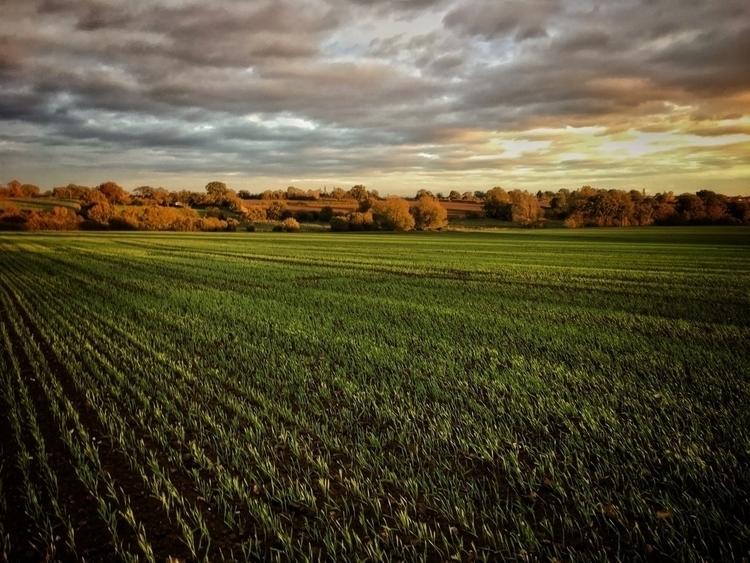 Evening light field, Norfolk - landscape - davidhawkinsweeks | ello