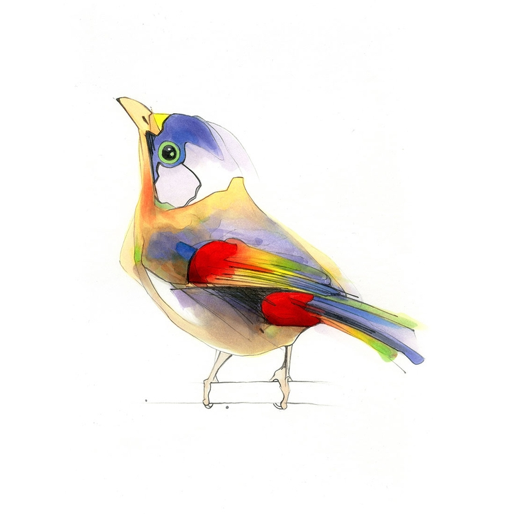 Aves - bird, illustration, copicmarkers - alexismarcou | ello