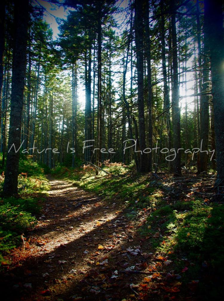 life soil man. healing trees ti - natureisfree | ello