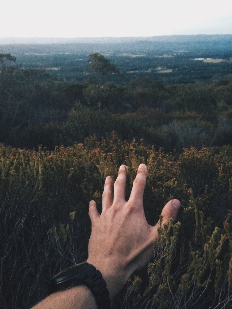 // touch sensitive  - nature, photography - joelaustralia | ello