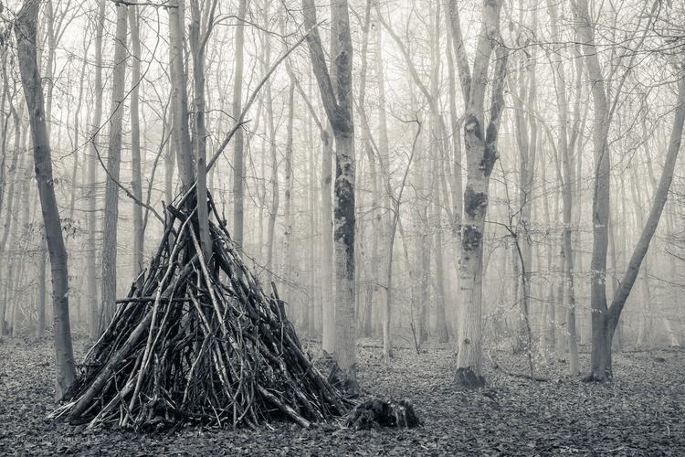 Stoke Trees - misty, foggy, woodland - toni_ertl | ello