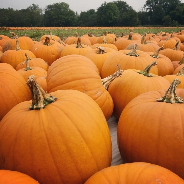 Pick pumpkin! Halloween coming - estelleclarke | ello