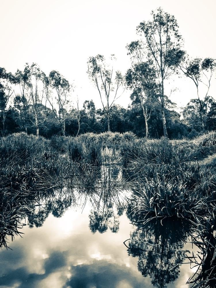 Wetlands - sacrecour | ello
