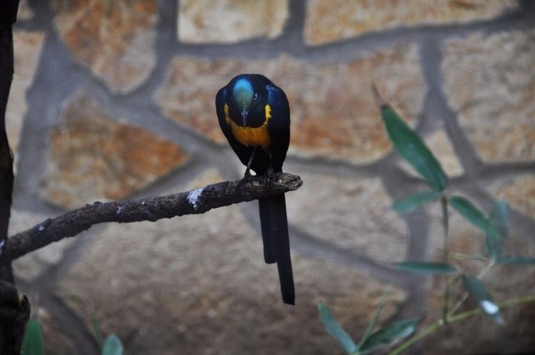 trip zoo Szeged Hungary resulte - xenotm   ello