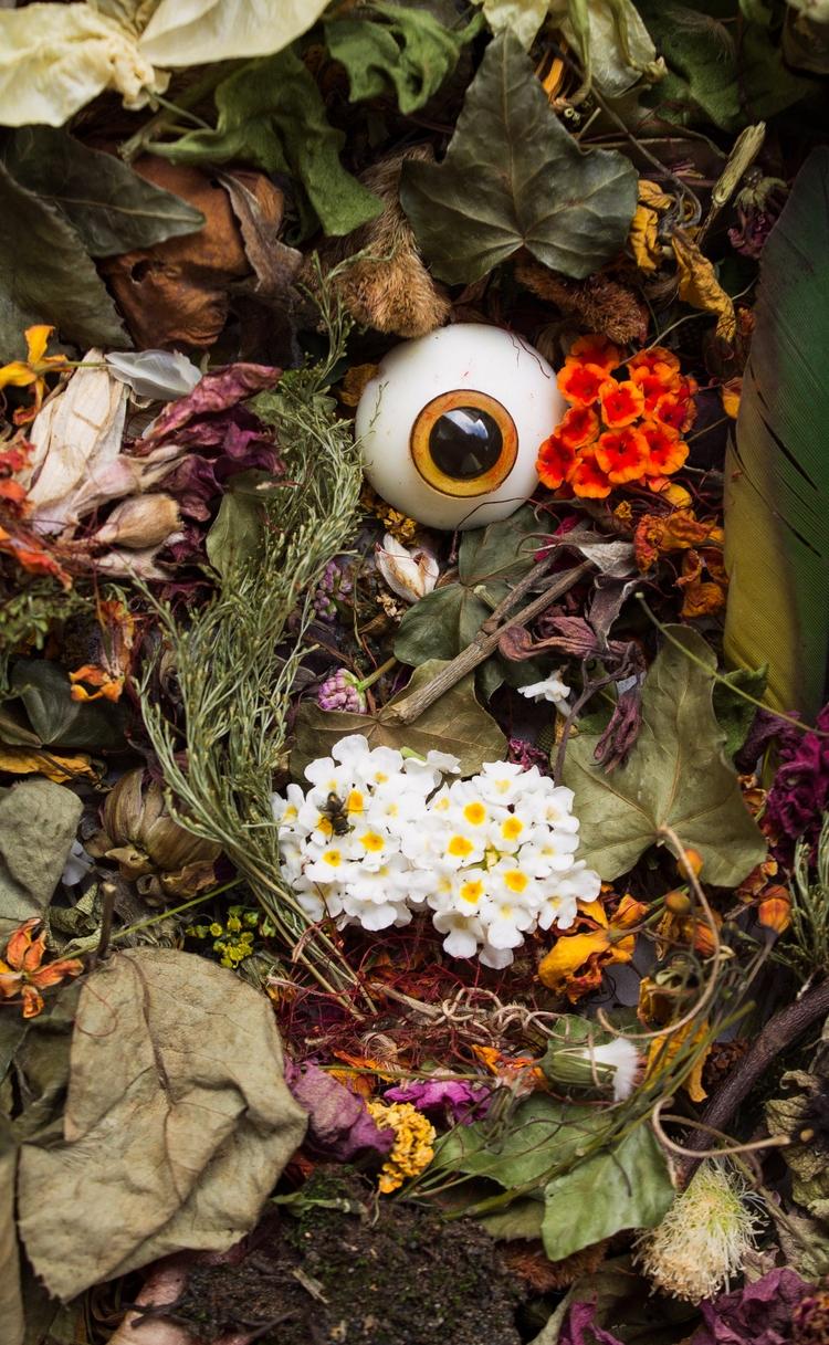 Happy Halloween - eye, flower, fly - franalvez | ello