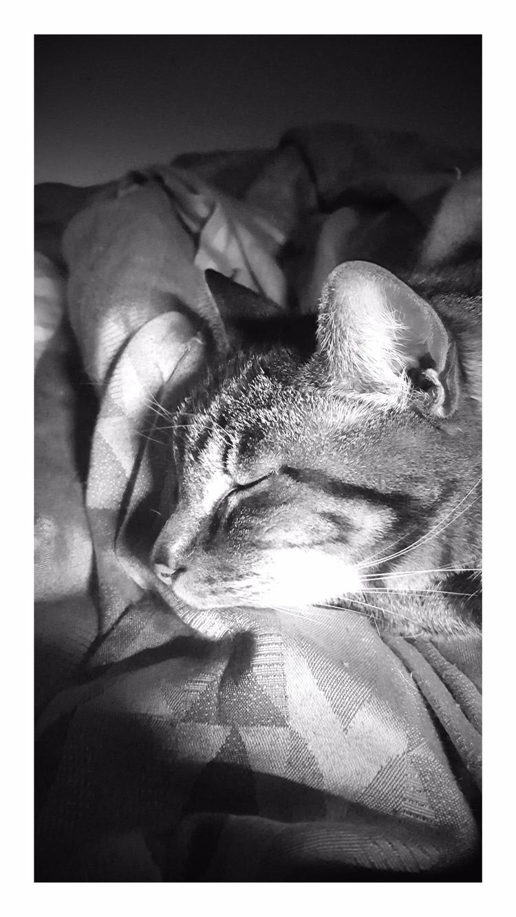 Nap Time - cats - sezzyharris | ello