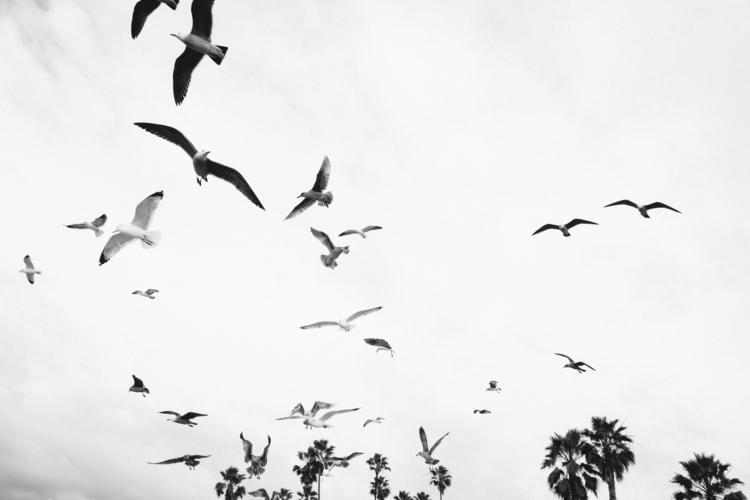 Seagulls. Ocean Beach. 2017 - oceanbeach - jimparkerphotography | ello