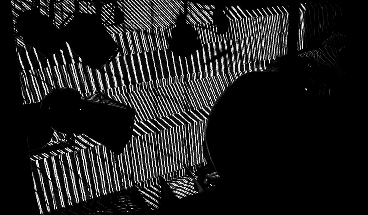 SUNIL SHARPE + analogue, dogs,  - hellopanos | ello