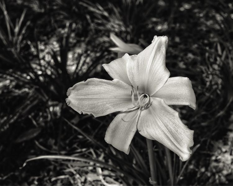 joy sadness flowers constant fr - pixnix | ello