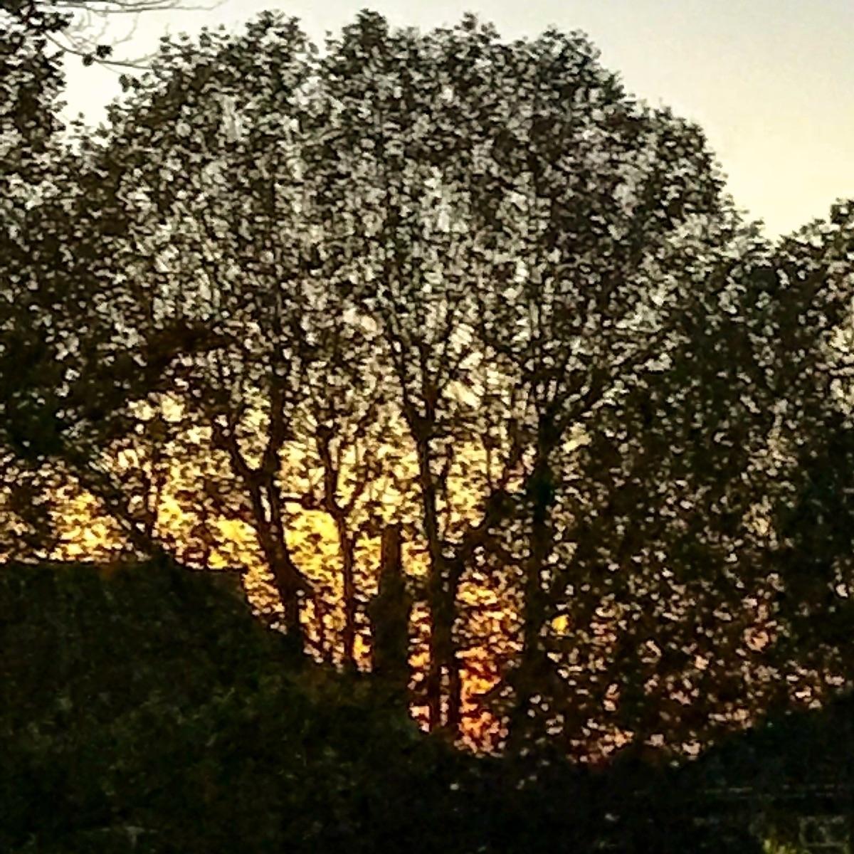 loves sunshine - charles_3_1416 | ello