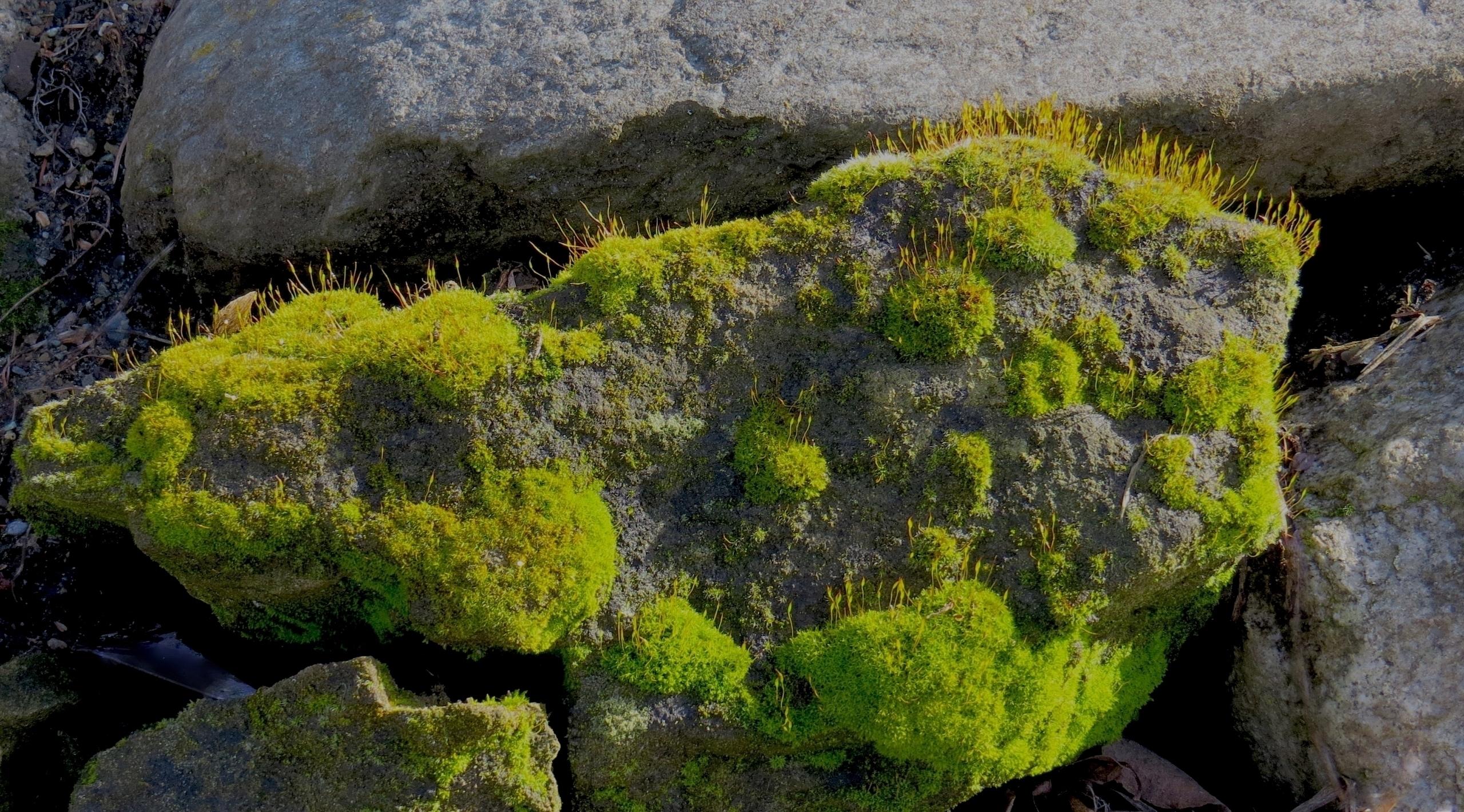 Moss Lichens North Cascade Moun - dave63 | ello