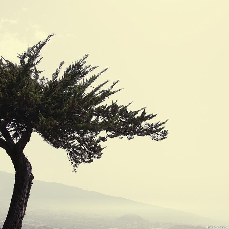 Tree Tenerife, Puerto de la Cru - erik_schepers   ello
