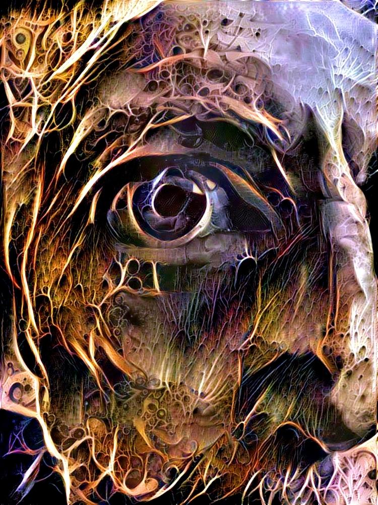 Cobwebs 2 - photography - kenlong | ello