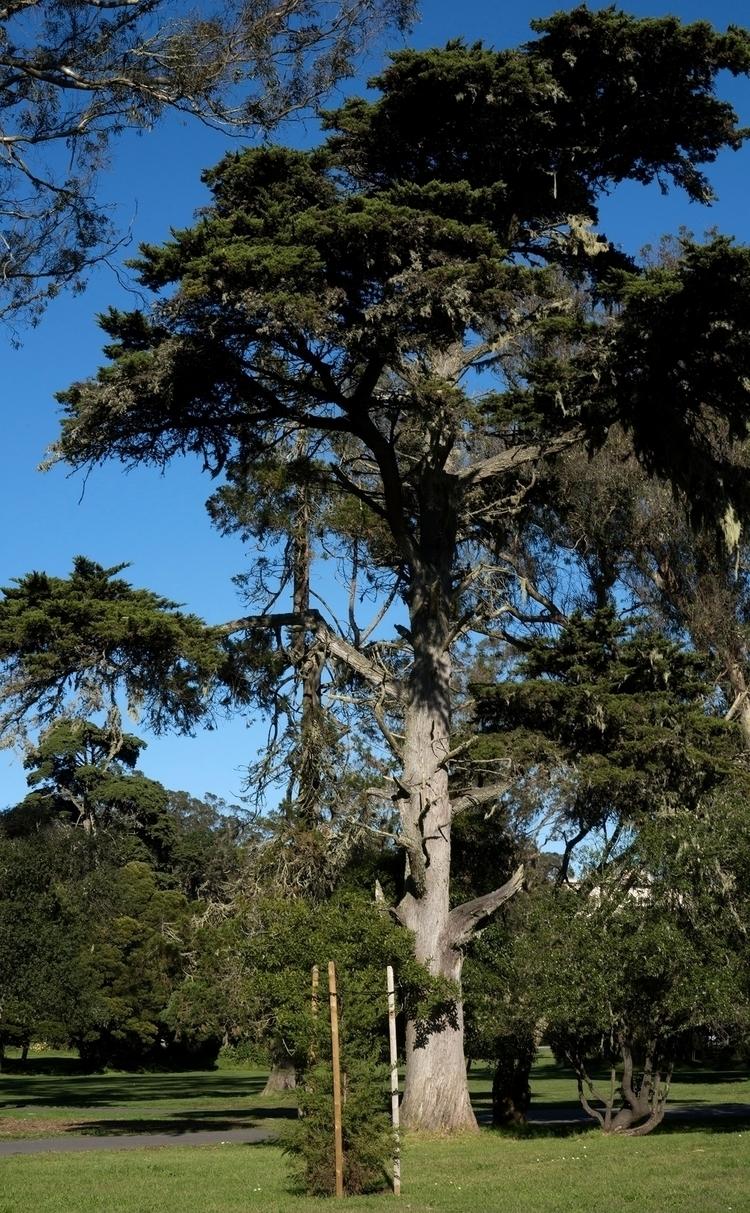 Des parcs dans la ville de San  - gclavet | ello