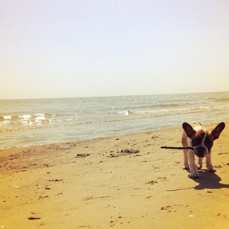 Beach Frenchie  - chrispersaud, frenchbulldog - chrispersaud | ello