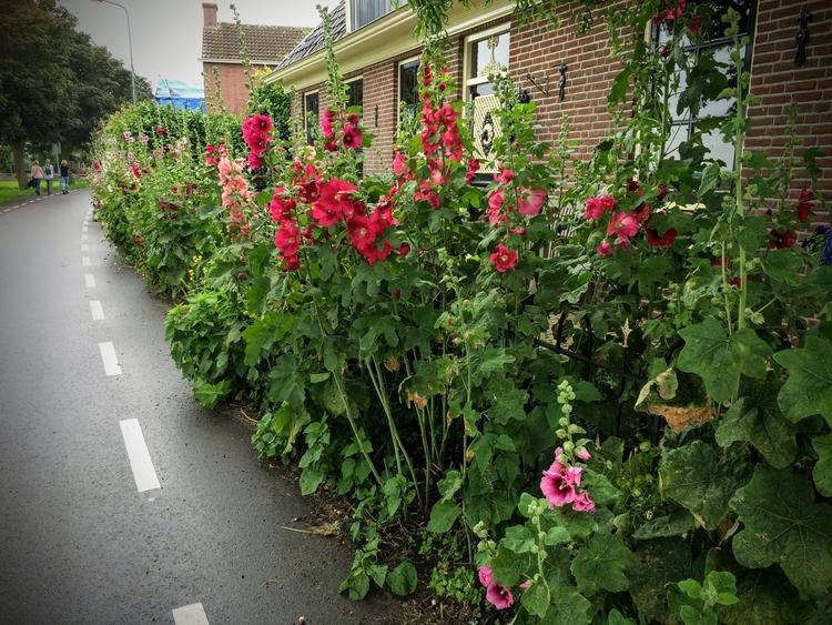 flowers - huis-tuin-en-keukenfotograaf | ello