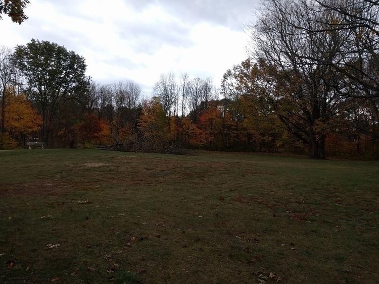 Trees Fall literally - alanpeabody | ello