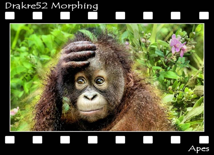 Apes Morphing. Film: Page - drakre52   ello