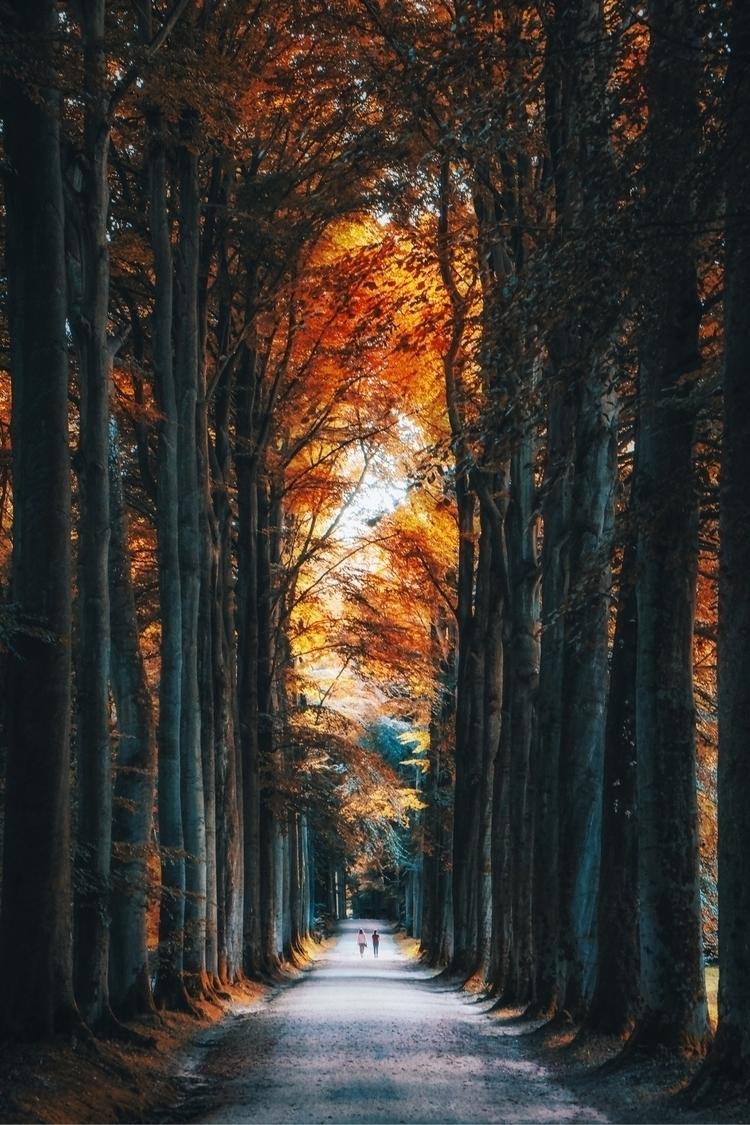 Autumn Belgium - tristanlb | ello