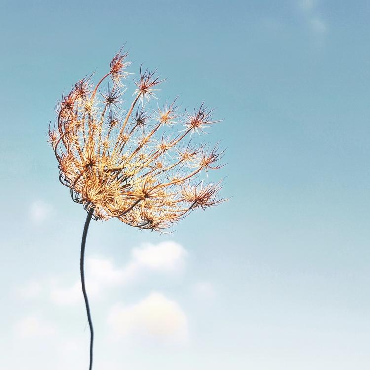 El cel de fons Submitted [Desig - maria_minimal | ello