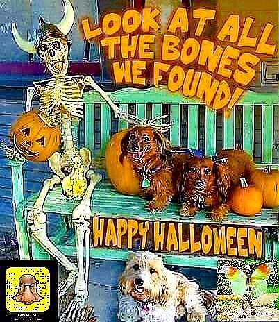 Funny medicine - Halloween, Laughter - vicsimon | ello