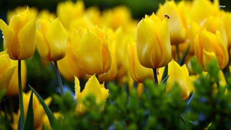 Daily Tulip – Archeological New - robert-mcangus | ello