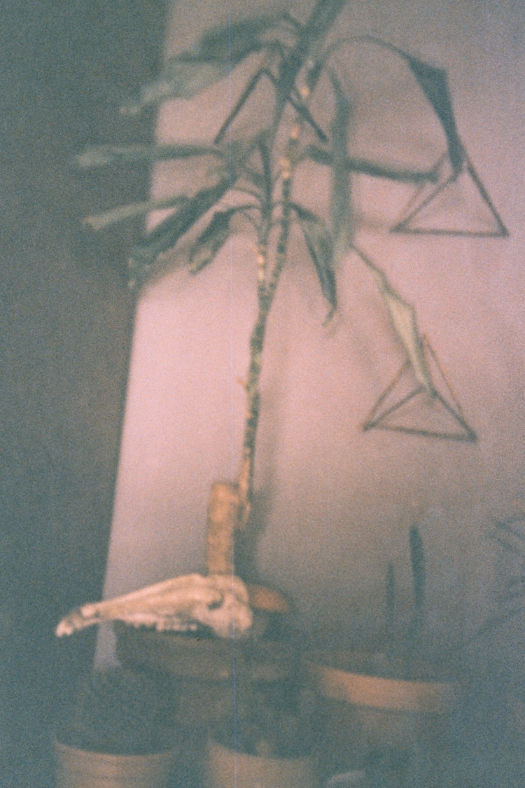 Squirrel elephant leg cactus he - lucika   ello