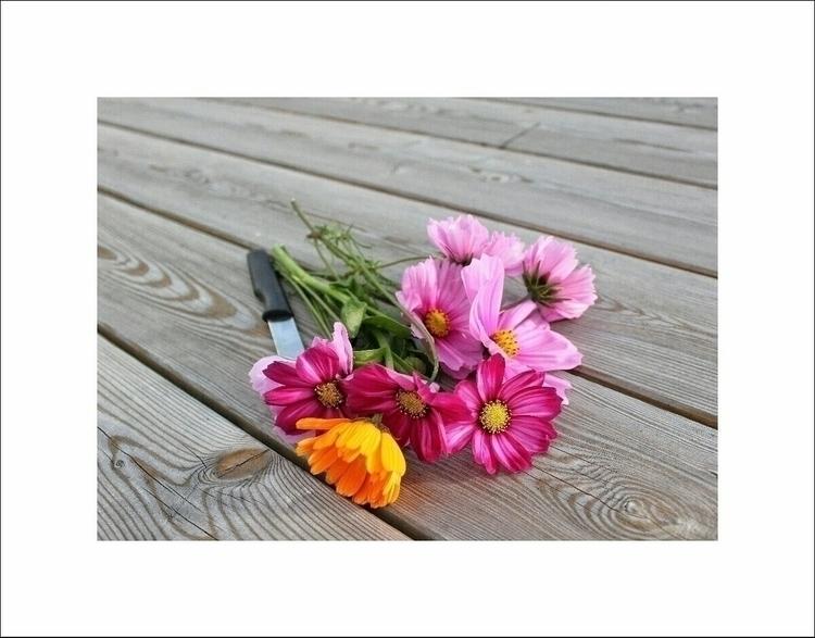 October - flowers, pink, nature - aleksaleksa | ello