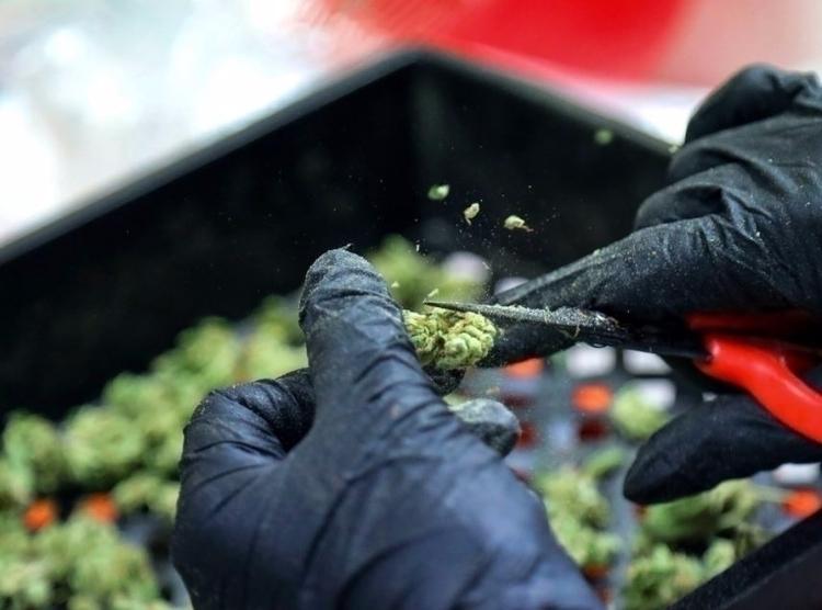 Veterans Groups Push Medical Ma - ellocannabis | ello