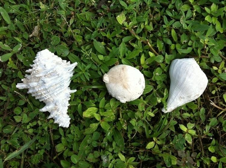 collected fossils jogging big s - douglascraig | ello