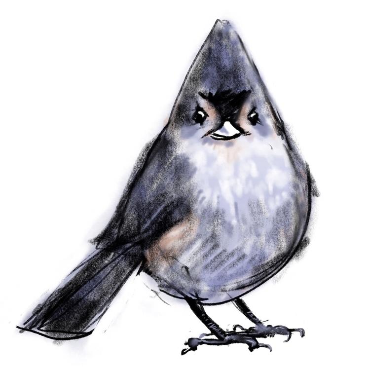 Tufted Titmouse - bird, sketch, illustration - reneeleigh | ello