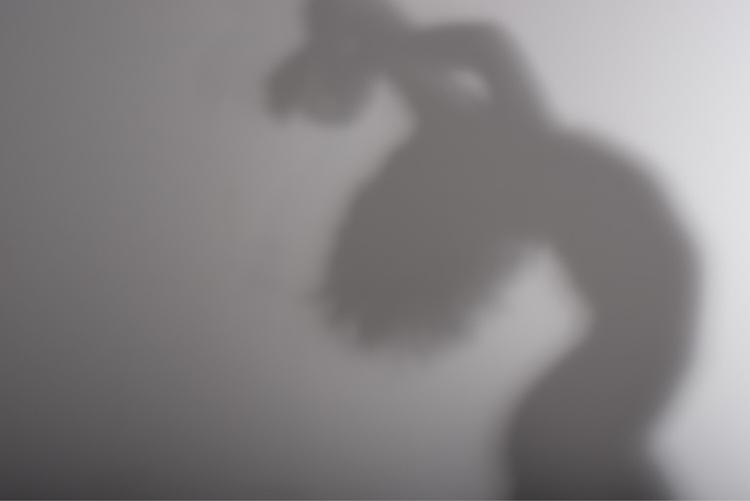 shadow escapes body animal shel - networkabstracted   ello