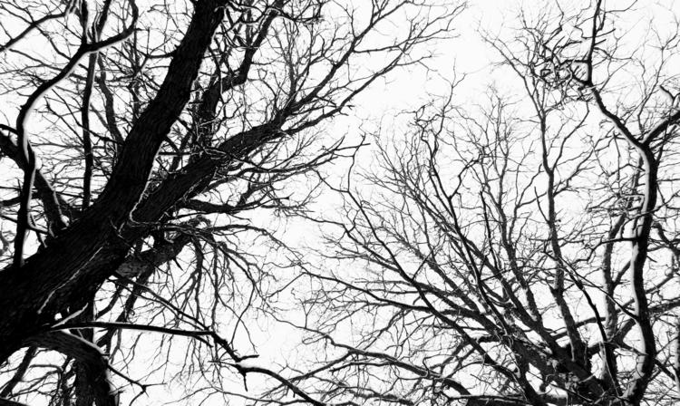 Tree Branches Winter. Nature cr - vincentvicari | ello