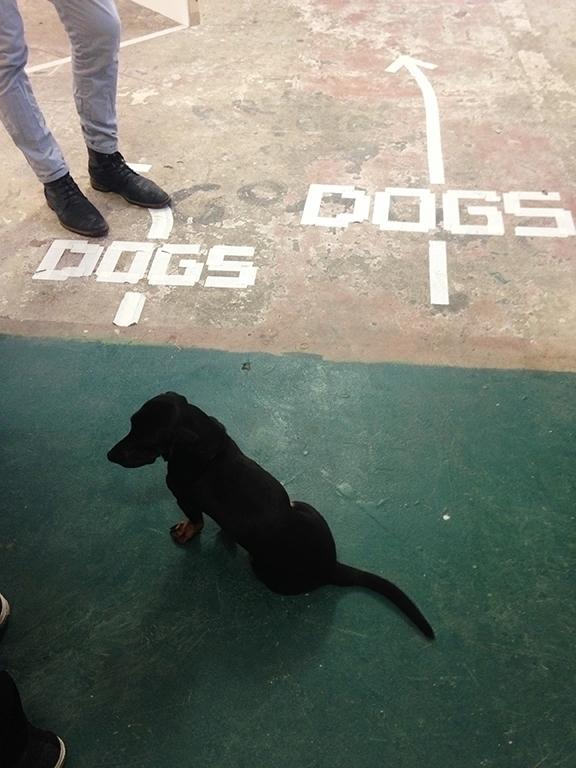 DOGS - interactive installation - nnkstll | ello