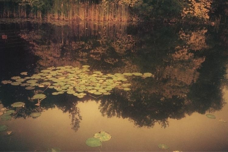 Lirios en estanque - 35mm, film - noeangelito   ello