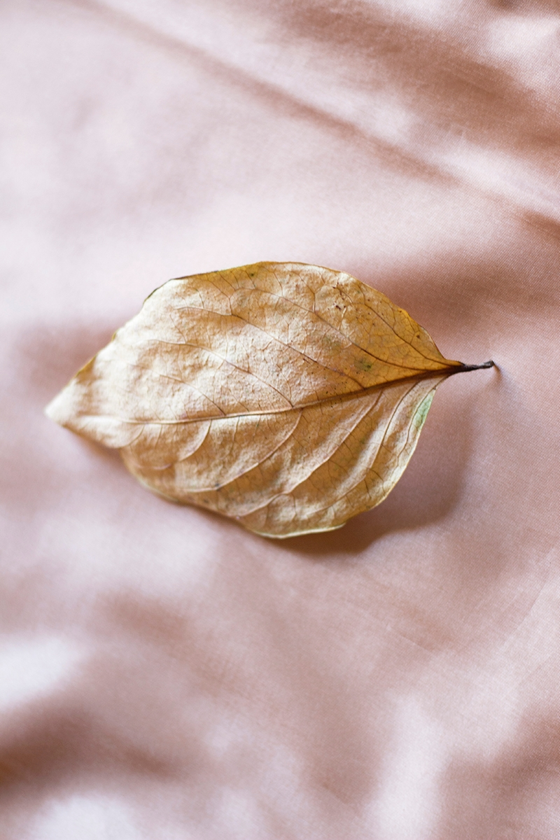 Autumn Beauty Roberta Gregorace - robertagregorace   ello