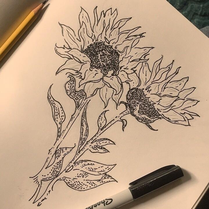 sunflowers, pen - erycmoss | ello