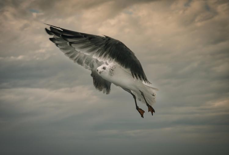 Pulling port guys ropes - seagull - rickschwartz | ello
