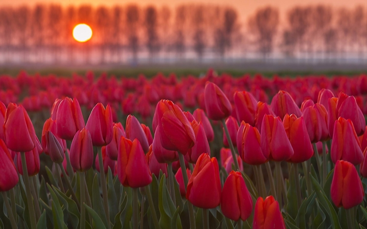 Daily Tulip – Archaeological Ne - robert-mcangus   ello