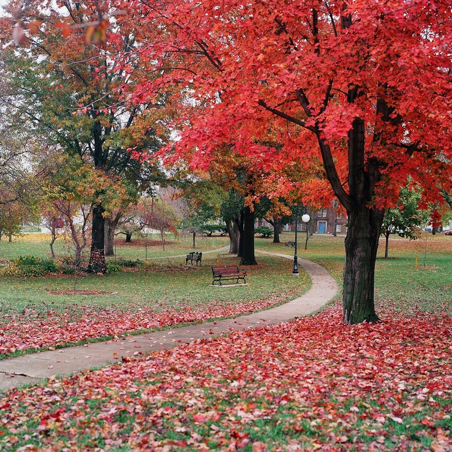 autumn,, park,, filmphotography - ohpreis | ello