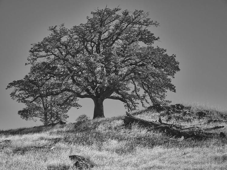top. WebSite - monochrome, Landscapes - tychobrown | ello