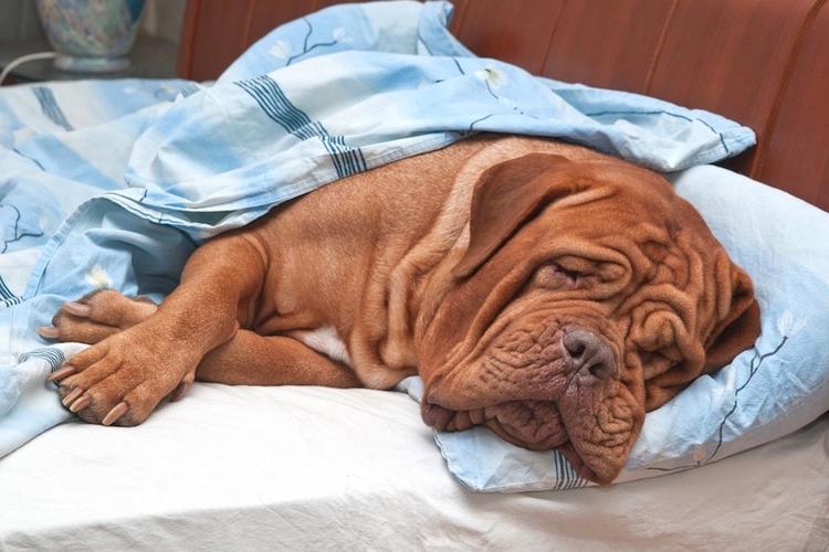 sides bed cuddle warm Saturday - rxmobility   ello