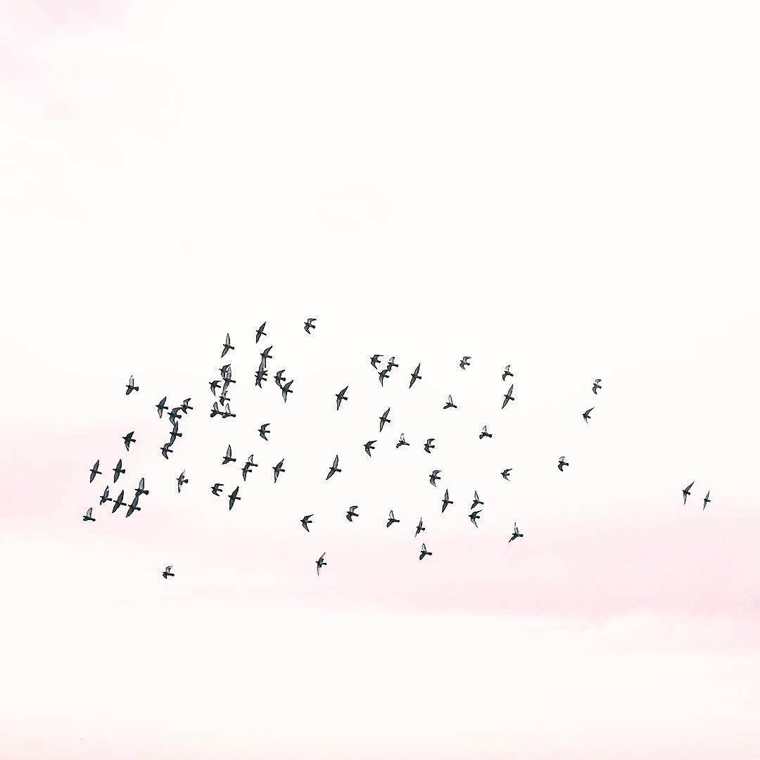 Birds Cloud - anamarques210376 | ello