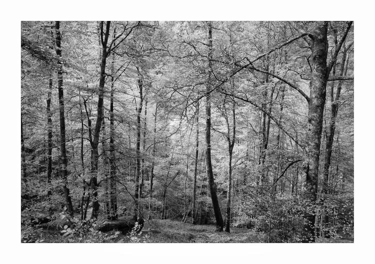 Bosque de Moñacos, Asturias, Sp - guillermoalvarez | ello