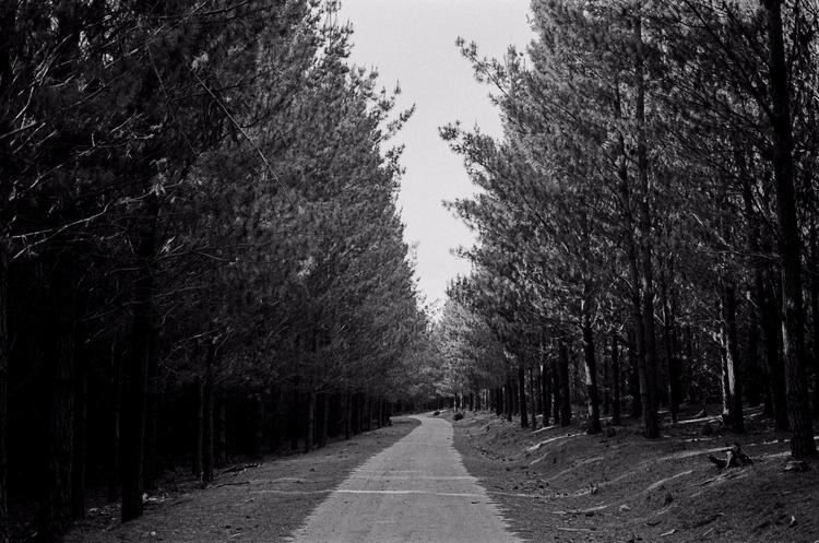Belanglo State Forest - okblake | ello