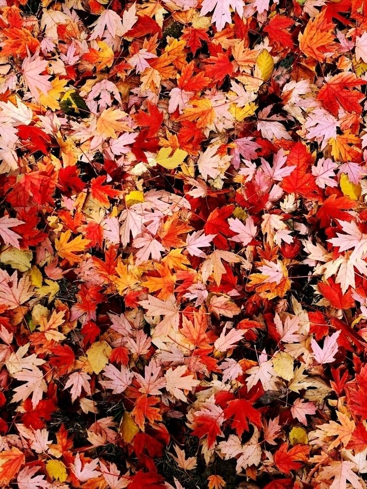 fall, leafs, leaves, warmcolors - melissaaanguyen | ello