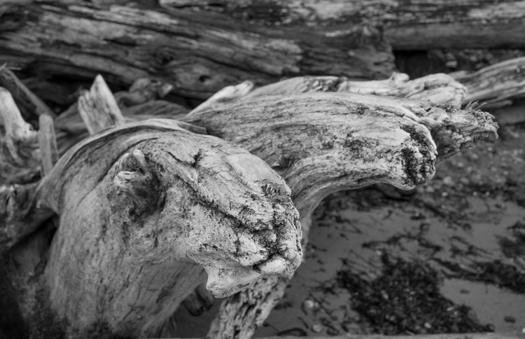 Island - horses, Whidbey, driftwood - usnrmustang | ello