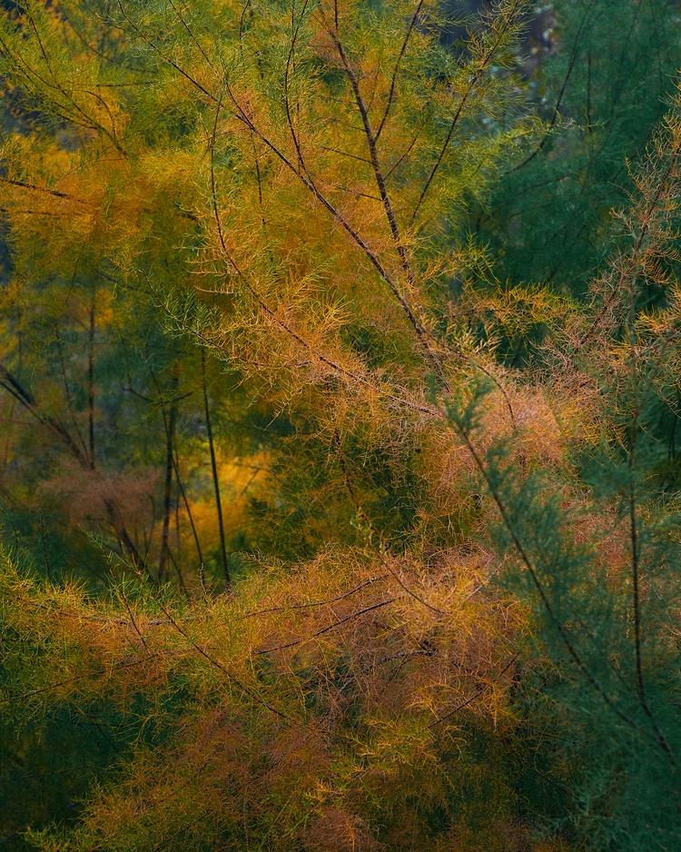 day reallllly prettttttty - fallcolors - jsrphotos | ello